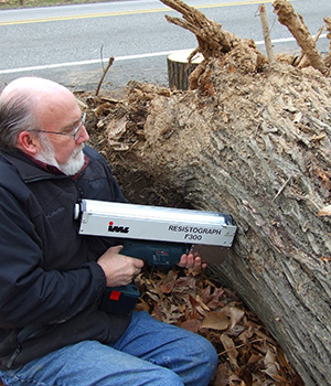 In-depth Tree Safety Inspection