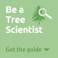 Tree Scientist