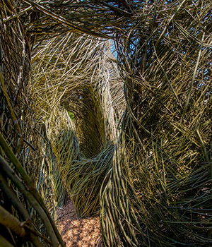 Opening Day of the Patrick Dougherty Installation